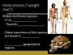 homo erectus upright man