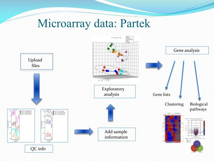 microarray student Activity 314 student response sheet part i: dna microarray virtual lab why are tissue samples from healthy and cancer cells taken from the same patient.