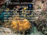 what makes wobbegongs great hunters