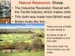 natural resources sheep