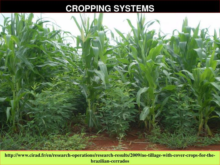 CROPPING SYSTEMS