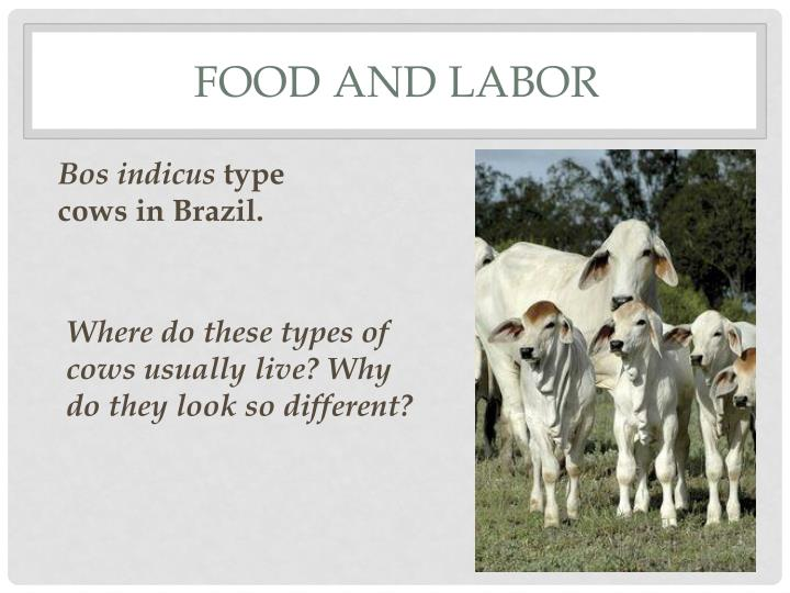 food and labor n.