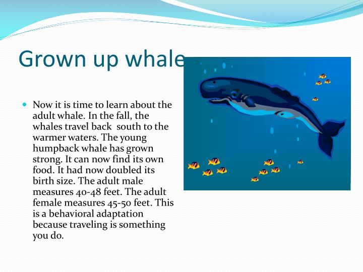 Grown up whale