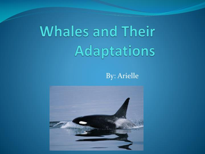 whales and their adaptations n.