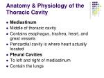 anatomy physiology of the thoracic cavity