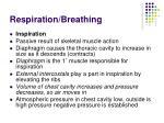 respiration breathing