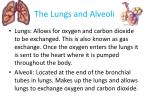 the lungs and alveoli