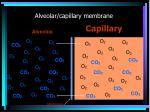 alveolar capillary membrane