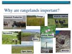 why are rangelands important1