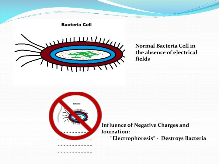 Normal Bacteria Cell in the absence of electrical fields