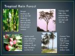 tropical rain forest1