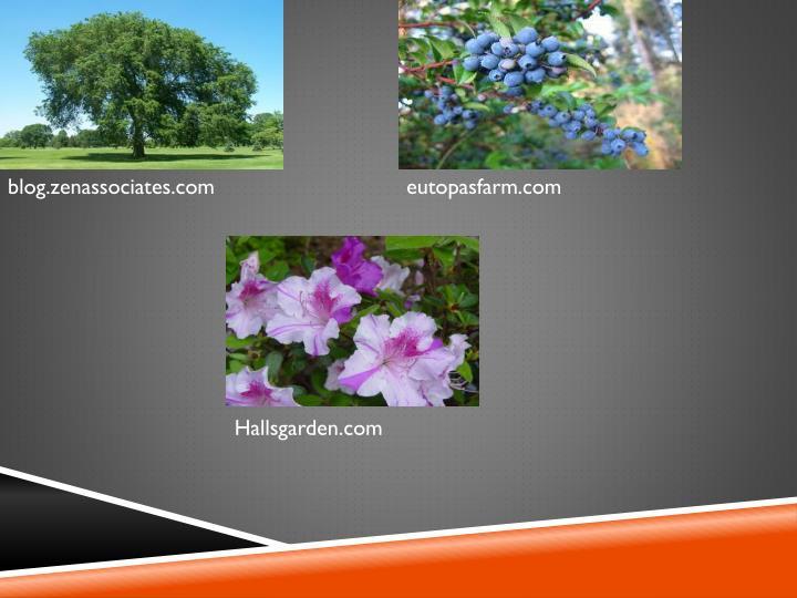 blog.zenassociates.com