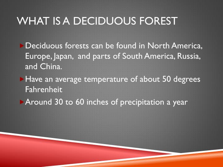 What is a deciduous forest