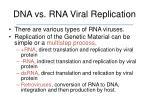 dna vs rna viral replication