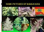 some pictures of marijuana