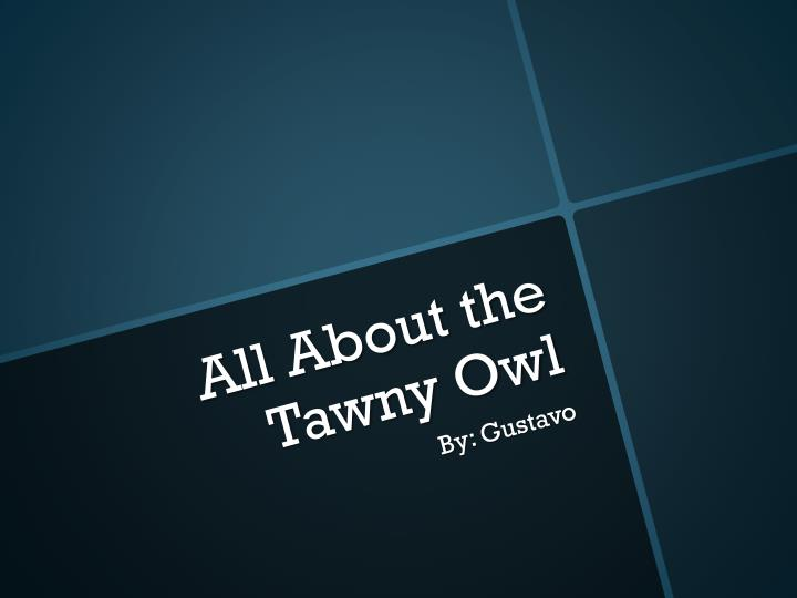 all about the tawny o wl n.