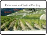 patamares and vertical planting