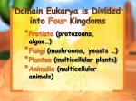 domain eukarya is divided into four kingdoms