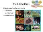 the 6 kingdoms5