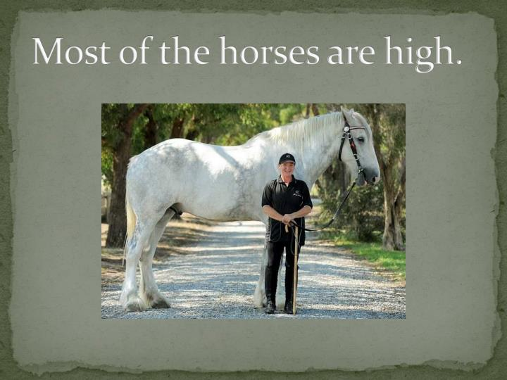 Most of the horses are high.