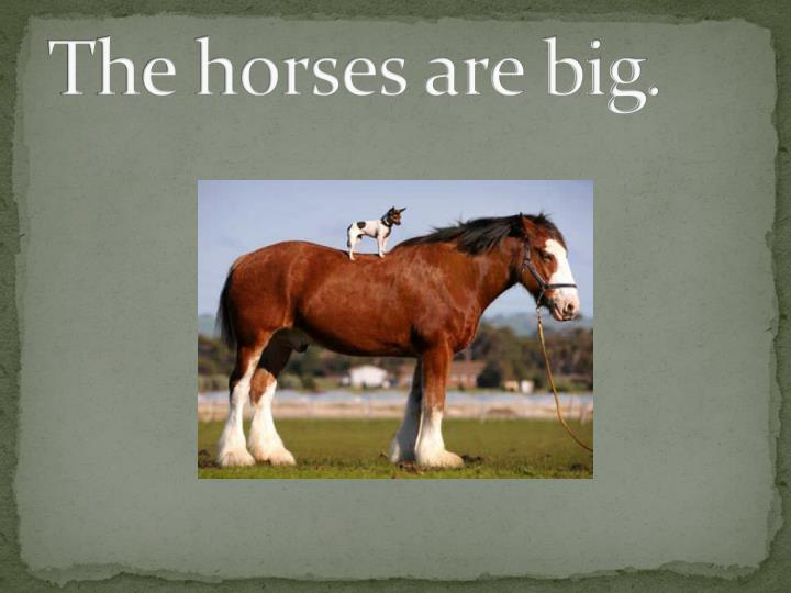 The horses are big