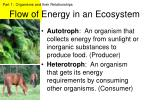 flow of energy in an ecosystem