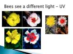 bees see a different light uv