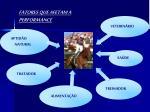 fatores que afetam a performance
