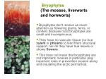bryophytes the mosses liverworts and hornworts
