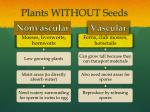 plants without seeds