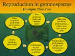 reproduction in gymnosperms example pine tree