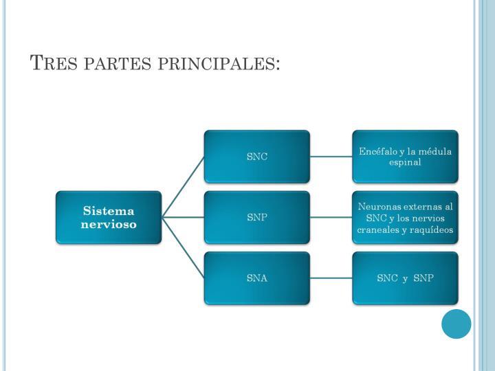 PPT - EMBRIOLOGIA DE SISTEMA NERVIOSO PowerPoint Presentation - ID ...