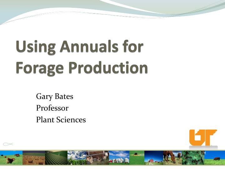 using annuals for forage production n.