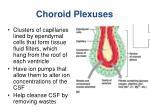 choroid plexuses