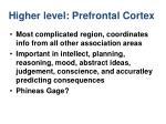 higher level prefrontal cortex