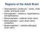 regions of the adult brain