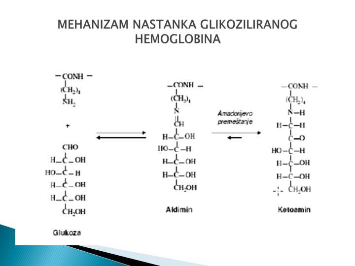 MEHANIZAM NASTANKA GLIKOZILIRANOG HEMOGLOBINA