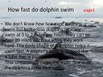 how fast do dolphin swim page3