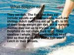 what dolphin eat page4