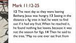mark 11 12 25