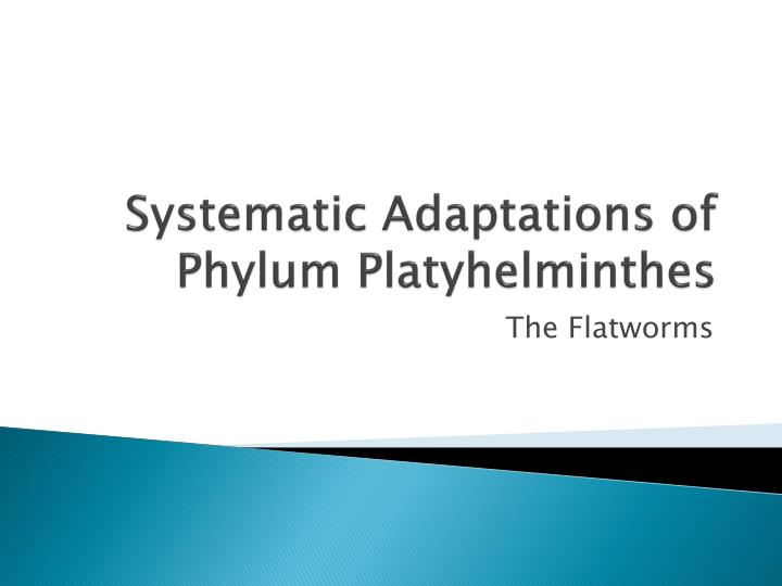 systematic adaptations of phylum platyhelminthes n.