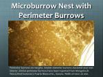 microburrow nest with perimeter burrows