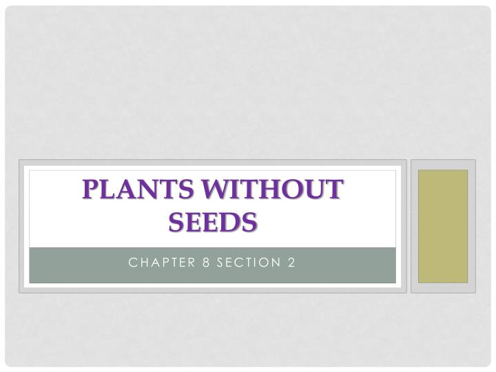 plants without seeds n.