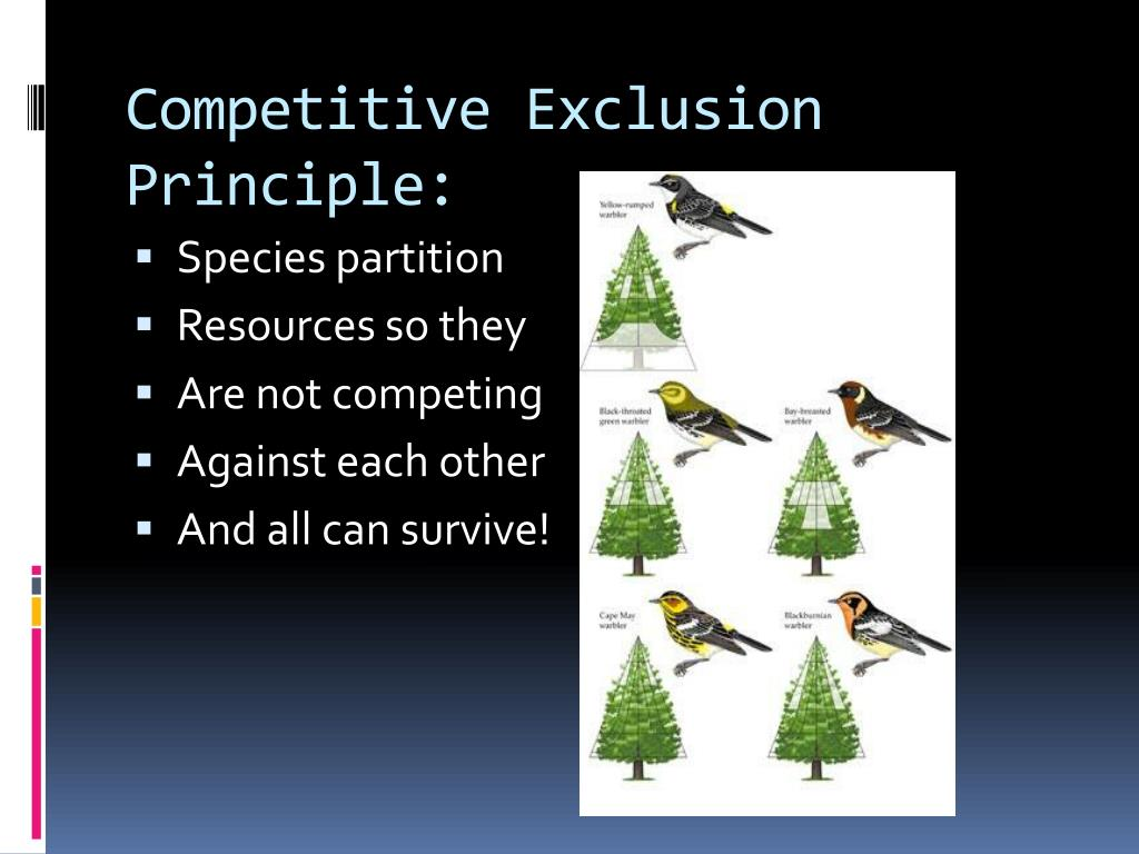 PPT - Community Interactions - several species living ...