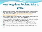 how long does poblano take to grow