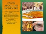 facts about the honey bee