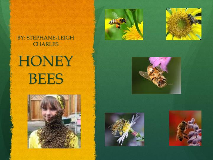 honey bees n.