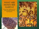 what are honey bee habitat