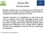 action b31