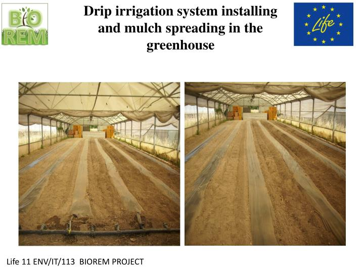 Drip irrigation system installing and mulch spreading in the greenhouse